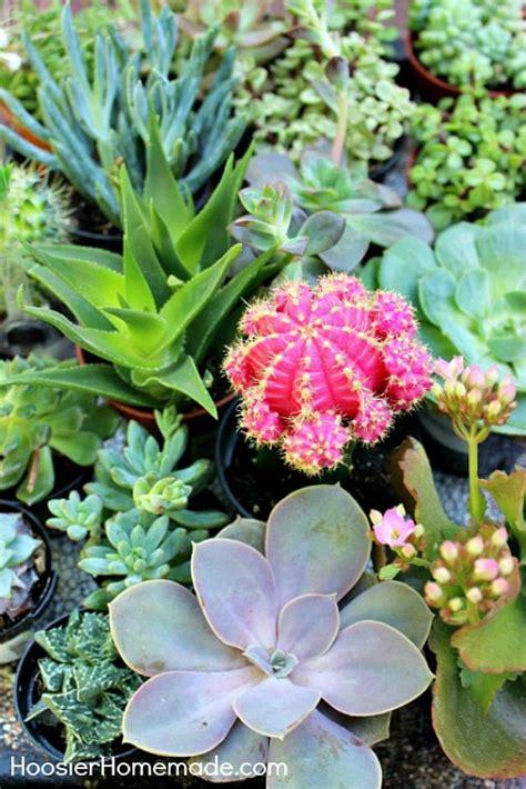 build  plant  succulent garden hoosier homemade