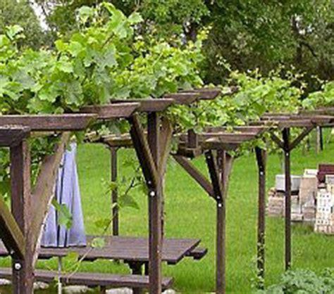 Building Trellises wein reben an pergola laubengang carport