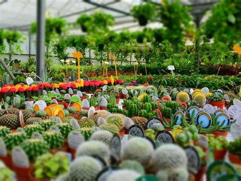 nurseries  buy plants  melbourne
