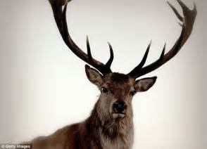 U Animals by America S Most Dangerous Animal Is The Deer Daily Mail