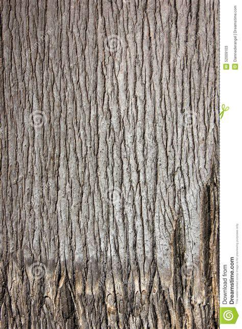 palm tree bark close  skin draw stock photo image