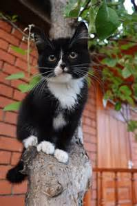 Female Cat Names By Personality » Home Design 2017