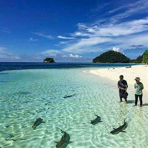 Best 25  Raja ampat islands ideas on Pinterest   Java image, Indonesia and Clear island waters