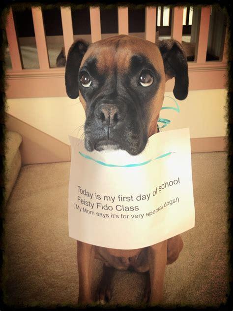 reddit puppy 101 could teach class on sad puppy 101