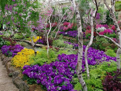 australian garden flowers parks and gardens nature and wildlife australia