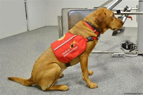 dogs detect cancer how do dogs smell cancer newsbeat