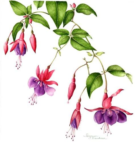 fuschia tattoo designs 46 best fuchsia u images on