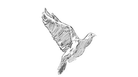 bird wings gif find amp share on giphy