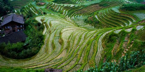 Rice Terraces Soundtrack Mcd 201 a room with a view china s longsheng rice terraces travelogues from remote lands