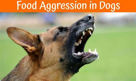 food aggression in puppies guide to prevent food aggression in dogs 2017 us bones