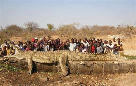 monster crocodile attacks fishing boat international fishing news 2012 10