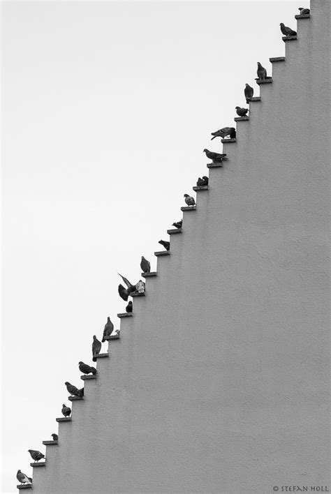Pigeons Stairs By © Stefan Holl.   All Home Decors