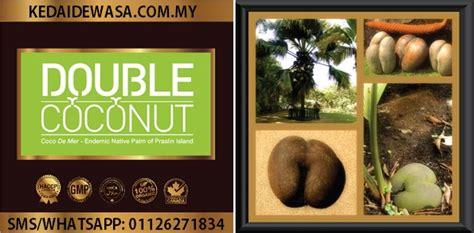 Ubat Ace Maxs Di Malaysia coconut testimoni coconut review