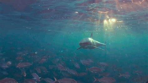 tumblr themes underwater underwater tumblr