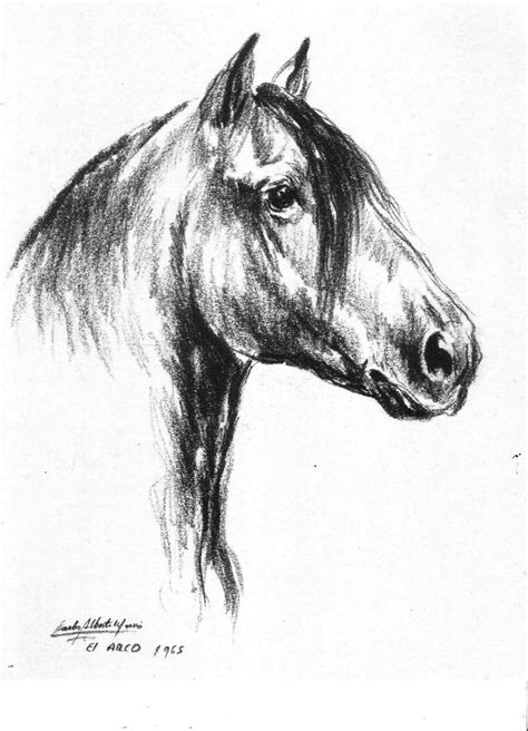blanco y negro pintura lineal dibujar caballo ilustraci 243 n pintura moderna y fotograf 237 a art 237 stica dibujos de