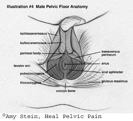 Icd 9 Code For Pelvic Floor Dysfunction by Nerve Obturator Nerve
