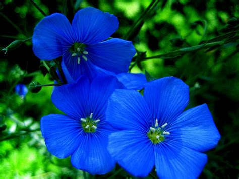 Bright Blue Flowers For Any Pretty Garden My Style Blue Flowers For Garden