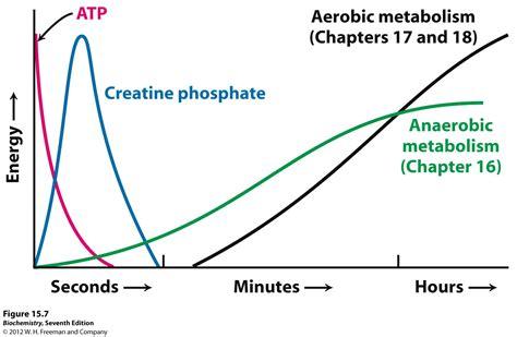 creatine glycerol phosphate kevin ahern s biochemistry bb 450 550 at oregon state