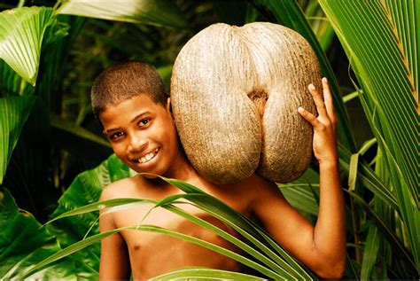 St Coco C Nel alberi piante fiori e frutti tropicali page 2