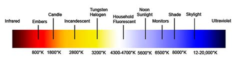 halogen color temperature what is light bulb color temperature and how it is