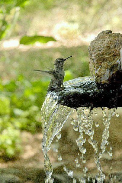 hummingbird taking bath birds pinterest
