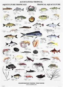 indo pacific tropical fish la tene maps