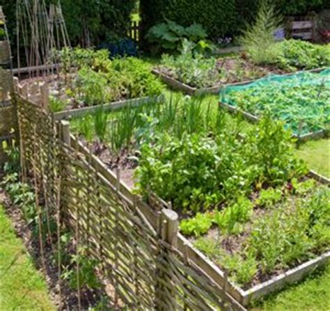 How Much Sunlight Do Growing Vegetables Need Garden How Much Sun Does A Vegetable Garden Need