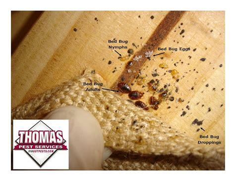 bed bug drug thomas pest services albany ny 12205 angie s list