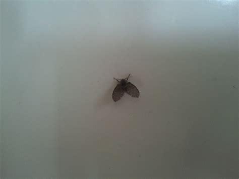 schwarze fensterbank schwarze kleine fliegen in k 252 che logisting