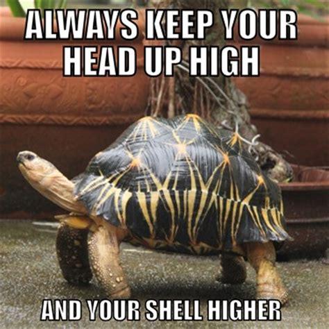 Tortoise Meme - image gallery tortoise meme