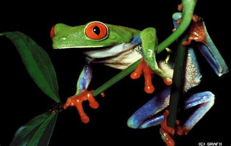 tropical forest animals and plants rainforest
