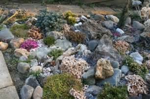 anlegen steingarten steingarten anlegen welche pflanzenarten sind am besten