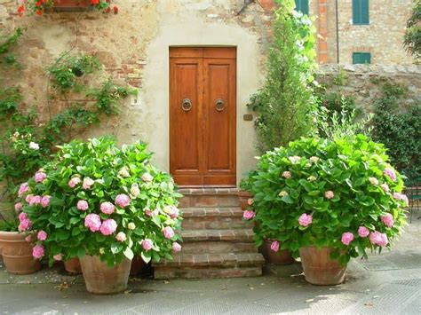 come potare le ortensie in vaso ortensia cura e coltivazione secret garden it