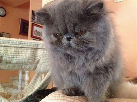 proving  cats  judgmental creatures