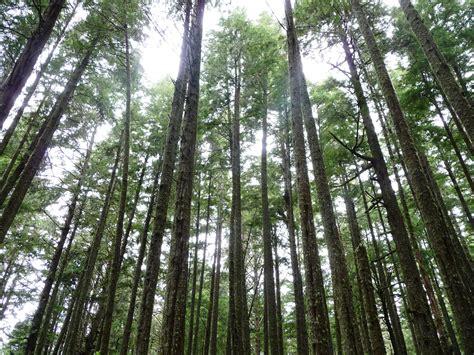 thin tree thin trees kevin s travel
