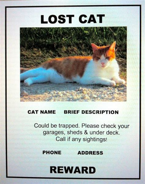 lost cat poster template lost cat finder pet detective lost cat poster exle