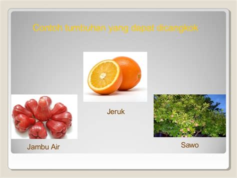 Ijuk Tebu presentasi vegetatif buatan