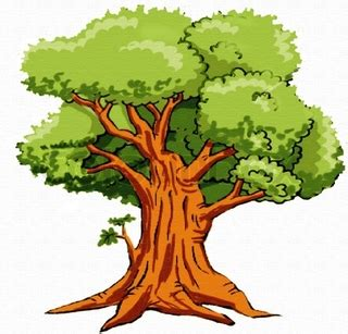 narra tree coloring page narra tree clipart clipartxtras