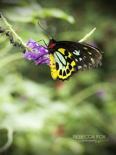 butterfly house st louis st louis mo on pinterest missouri abandoned churches and botanical gardens