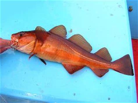 intossicazione alimentare pesce che cosa 232 bianco pesci intossicazione alimentare