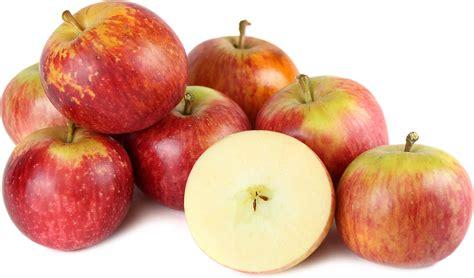 apple fuji fuji apples information recipes and facts