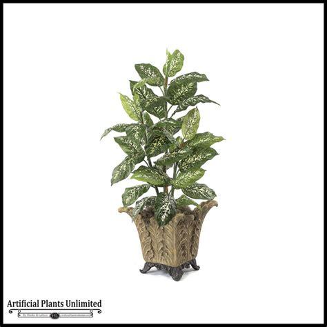 4 dieffenbachia plant green yellow indoor