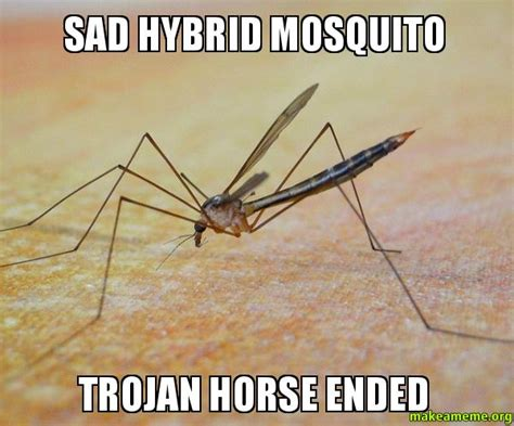 Mosquito Memes - sad hybrid mosquito trojan horse ended make a meme