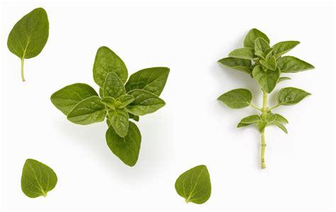 indoor kitchen herb garden ideas indoor herb garden ideas how to make a kitchen herb garden