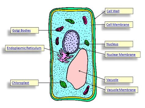 animal cell diagram 5th grade plant cell parts plant cell verna science