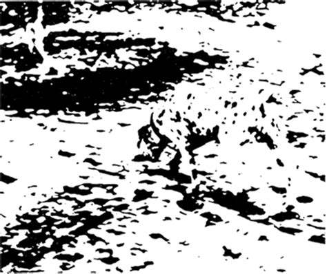 imagenes percepcion visual para niños zurdos cl percepci 243 n visual