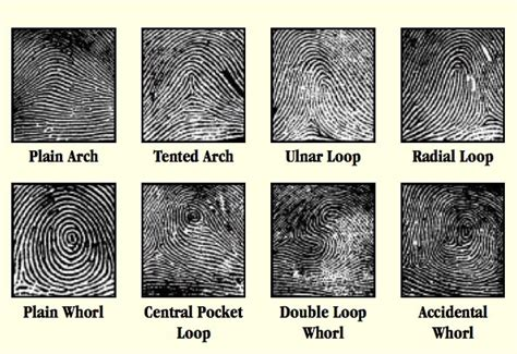 pattern name and classification fingerprinting the classification of fingerprints