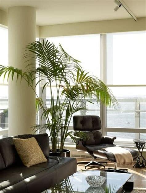 goldfruchtpalme wohnzimmer palmen f 252 rs wohnzimmer die das zimmer zweifellos erfrischen
