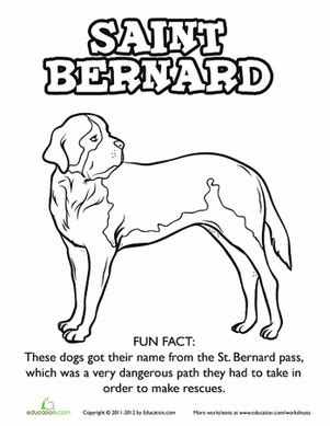 How To Draw St Bernard St Bernard Coloring Pages