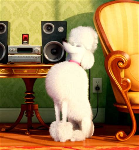 lifespan of a poodle review the secret of pets and colourful